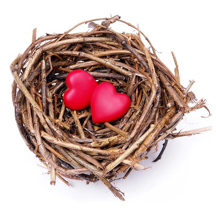 (Un) Empty Nest #BlogchatterA2Z#AtoZChallenge